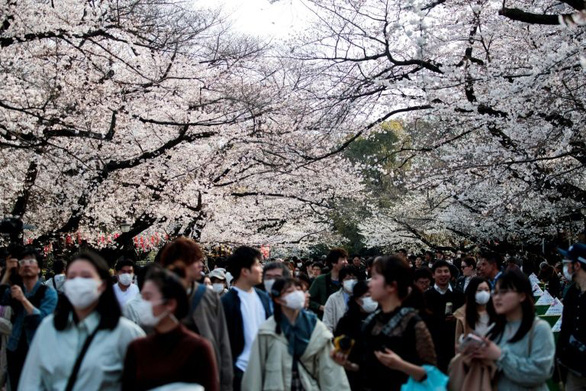 Bất chấp khuyến cáo, hàng ngàn người Nhật đổ xô đi ngắm hoa anh đào - Ảnh 1.