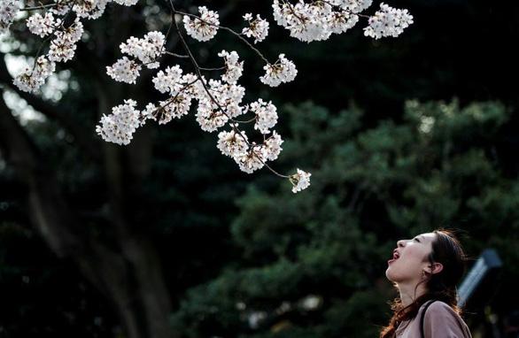 Bất chấp khuyến cáo, hàng ngàn người Nhật đổ xô đi ngắm hoa anh đào - Ảnh 2.