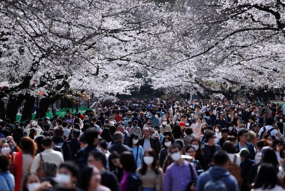Bất chấp khuyến cáo, hàng ngàn người Nhật đổ xô đi ngắm hoa anh đào - Ảnh 5.