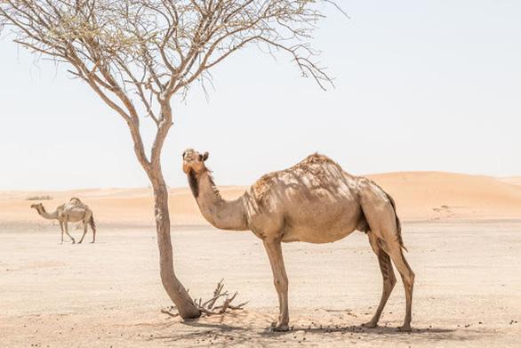 Những động vật hoang dã mang virus gây đại dịch - Ảnh 4.