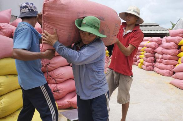 Tạm dừng thông quan xuất khẩu gạo - Ảnh 1.