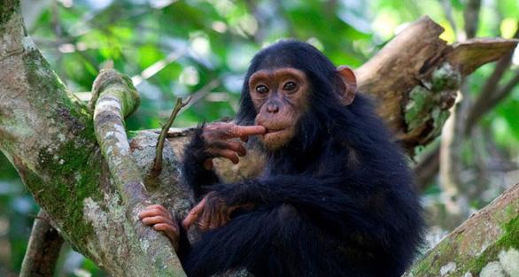 Những động vật hoang dã mang virus gây đại dịch - Ảnh 6.