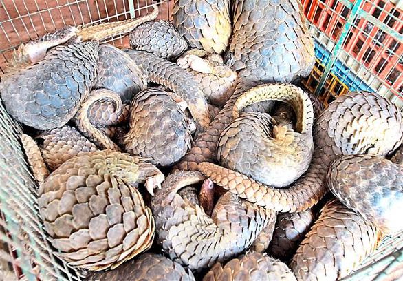 Những động vật hoang dã mang virus gây đại dịch - Ảnh 2.