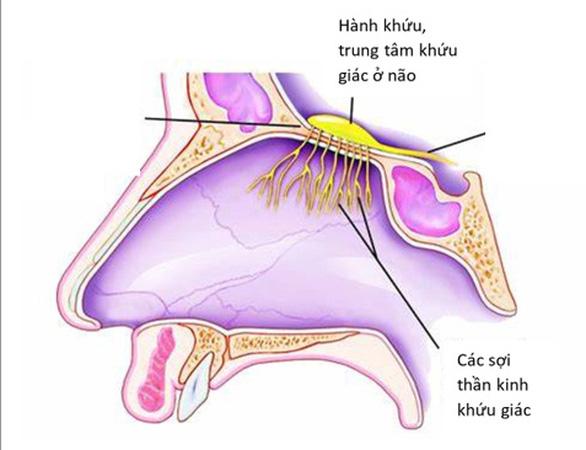 Mất mùi đột ngột: có thể là triệu chứng duy nhất ở bệnh nhân COVID-19 - Ảnh 1.