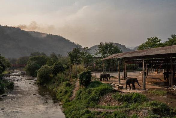 Hơn 1.000 con voi Thái Lan sắp phải đi ăn xin vì corona - Ảnh 1.