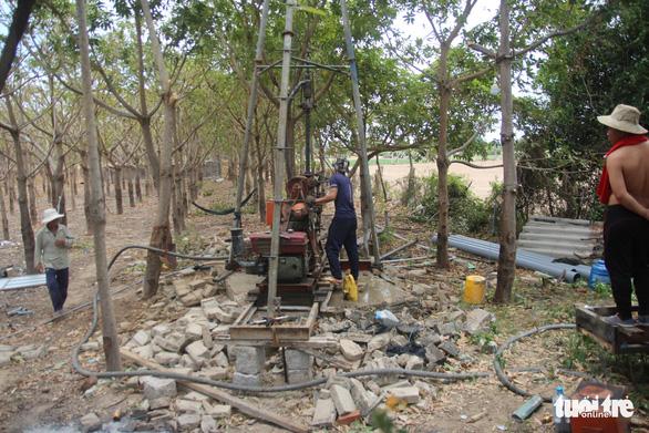 Gia súc ở Ninh Thuận bị đe dọa do thiếu nước trong nắng hạn kéo dài - Ảnh 3.