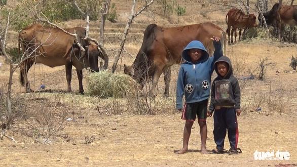 Gia súc ở Ninh Thuận bị đe dọa do thiếu nước trong nắng hạn kéo dài - Ảnh 8.