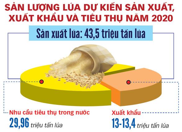 Xuất khẩu gạo: rà lại rồi tính tiếp - Ảnh 3.
