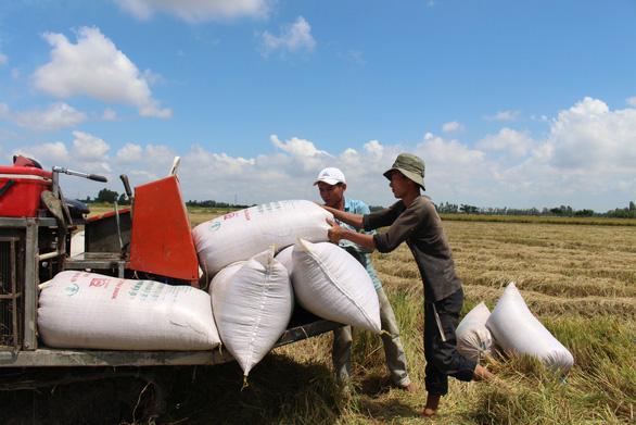 Kiên Giang, Long An kiến nghị xem xét lại việc tạm dừng xuất khẩu gạo - Ảnh 1.