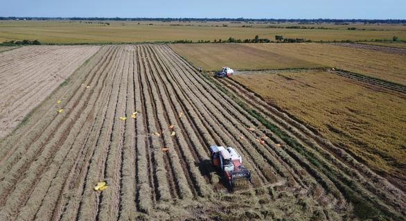 Chính phủ cho phép xuất khẩu 3 triệu tấn gạo thì vẫn ổn - Ảnh 2.