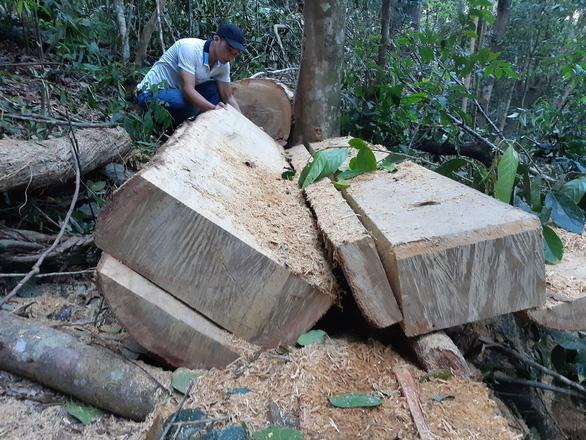 Lâm tặc xẻ gỗ ngay trong rừng phòng hộ đầu nguồn - Ảnh 3.