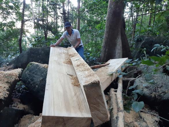 Yêu cầu khởi tố vụ lâm tặc xẻ gỗ ngay trong rừng phòng hộ đầu nguồn - Ảnh 1.