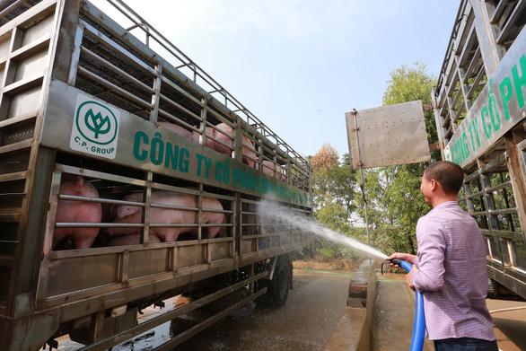 Doanh nghiệp chăn nuôi heo cam kết hạ giá heo hơi xuống 70.000 đồng/kg từ 1-4 - Ảnh 2.