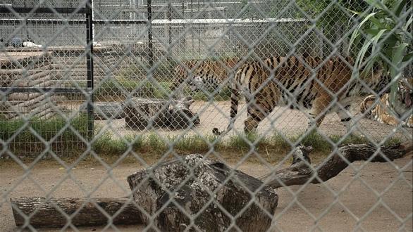Tiger King - Vua hổ: Lật tẩy thế giới của những tay nuôi thú - Ảnh 3.