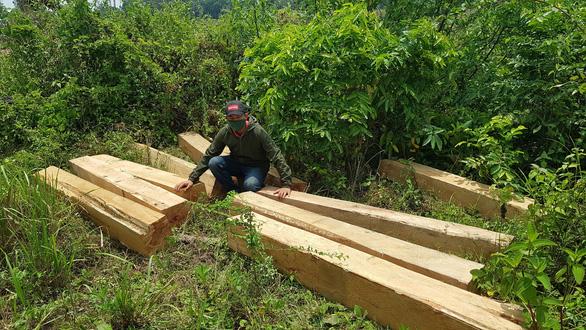 Khu bảo tồn thiên nhiên Ea Sô: Có tới 7-8 nhóm lâm tặc trà trộn để khai thác rừng - Ảnh 1.
