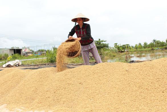 Sau vụ mở tờ khai nửa đêm: Kiến nghị giao hạn ngạch xuất khẩu gạo cho địa phương - Ảnh 2.