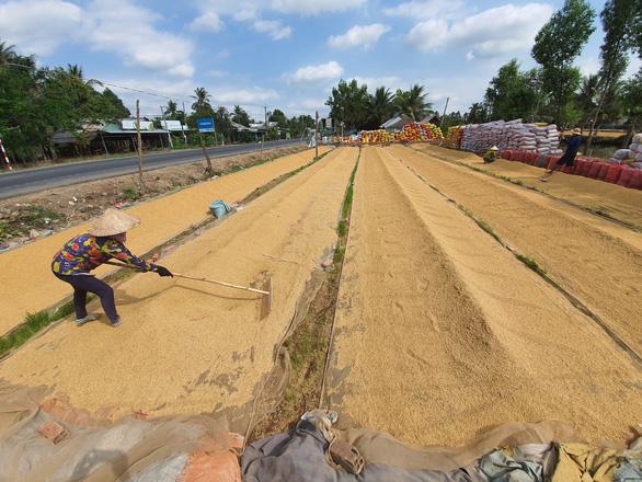 Sau vụ mở tờ khai nửa đêm: Kiến nghị giao hạn ngạch xuất khẩu gạo cho địa phương - Ảnh 3.