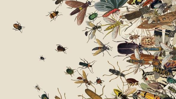Hơn một phần tư côn trùng biến mất chỉ sau 30 năm - Ảnh 1.