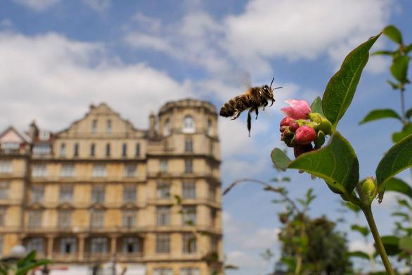 Hơn một phần tư côn trùng biến mất chỉ sau 30 năm - Ảnh 2.