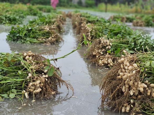 Nhiều nơi nắng hạn, Thừa Thiên Huế lại ngập vì mưa, vụ mùa bị đe dọa - Ảnh 6.