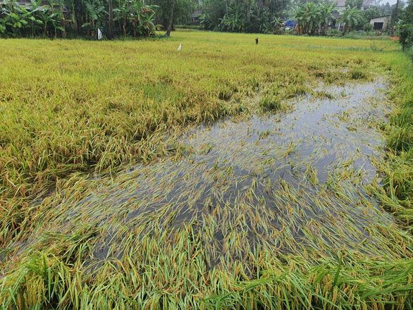 Nhiều nơi nắng hạn, Thừa Thiên Huế lại ngập vì mưa, vụ mùa bị đe dọa - Ảnh 2.