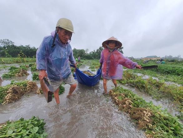 Nhiều nơi nắng hạn, Thừa Thiên Huế lại ngập vì mưa, vụ mùa bị đe dọa - Ảnh 4.