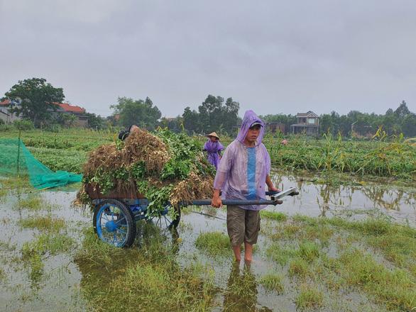 Nhiều nơi nắng hạn, Thừa Thiên Huế lại ngập vì mưa, vụ mùa bị đe dọa - Ảnh 7.