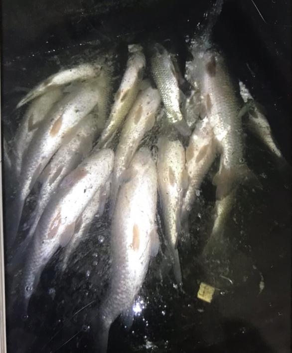 Cá chết hàng loạt dọc sông Mã, phát hiện có việc xả nước thải xuống sông - Ảnh 2.