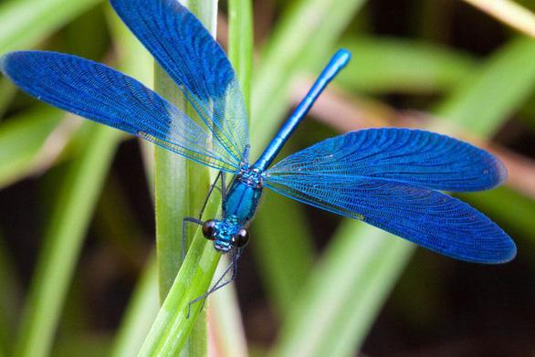 Khoa học tạo ra màu mới: xanh củ dền - Ảnh 3.