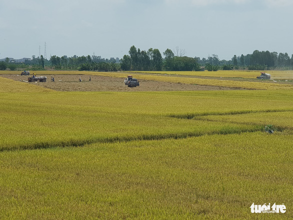 An Giang kiến nghị cho xuất khẩu gạo cứu nông dân và doanh nghiệp - Ảnh 1.
