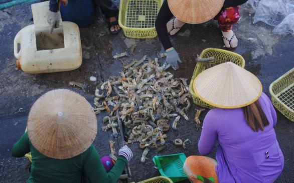 Xóm biển Khánh Hội sau 23 năm hứng cơn cuồng phong Linda - Ảnh 3.