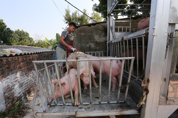 Bộ Nông nghiệp đề nghị trang trại, hộ chăn nuôi hạ giá heo xuống 70.000 đồng/kg - Ảnh 1.