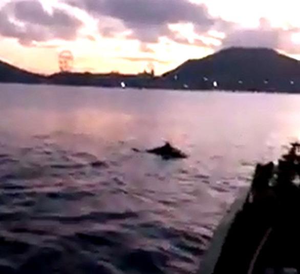 Đàn cá heo 'nhảy múa trên vịnh Nha Trang, bình thường hay bất thường? - Ảnh 3.