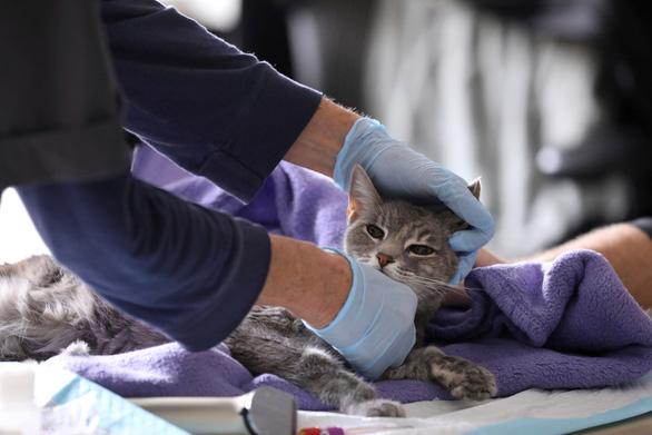 WHO sẽ điều tra sự lây nhiễm corona giữa người và thú nuôi - Ảnh 1.