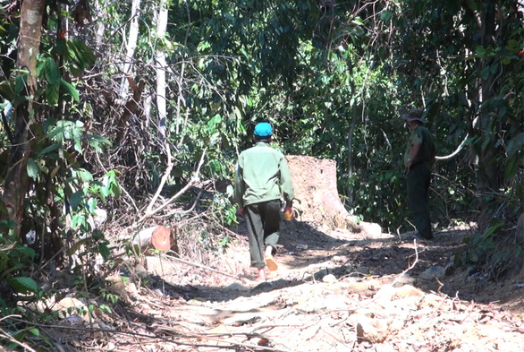 Lâm tặc mở cả cây số đường giữa rừng để đốn gỗ - Ảnh 2.