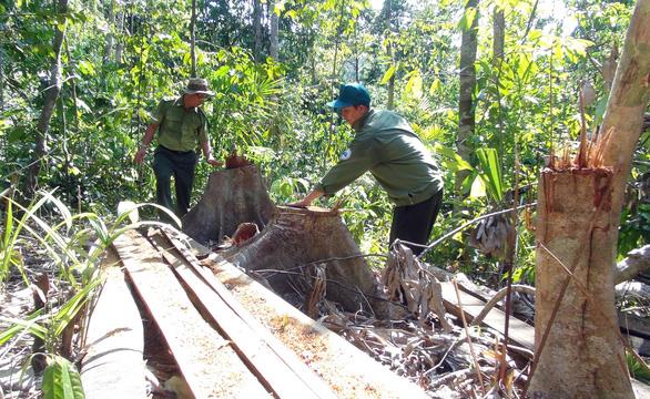 Lâm tặc mở cả cây số đường giữa rừng để đốn gỗ - Ảnh 3.