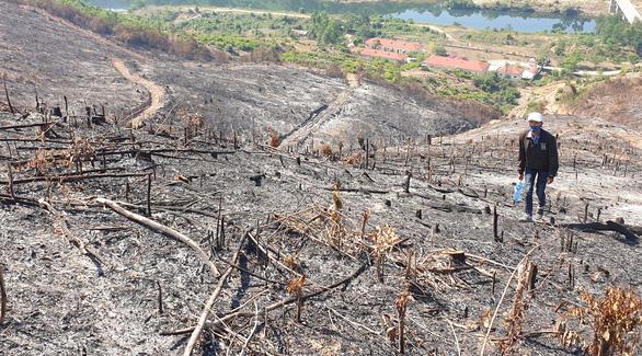 Giám đốc ban quản lý rừng thuê người đốt thực bì rẫy keo, lửa lan ra rừng - Ảnh 1.