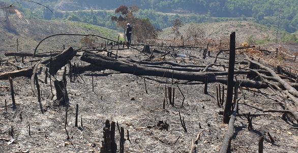 Giám đốc ban quản lý rừng thuê người đốt thực bì rẫy keo, lửa lan ra rừng - Ảnh 3.