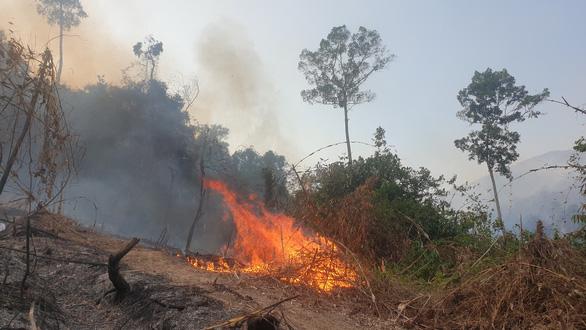 Giám đốc ban quản lý rừng thuê người đốt thực bì rẫy keo, lửa lan ra rừng - Ảnh 2.