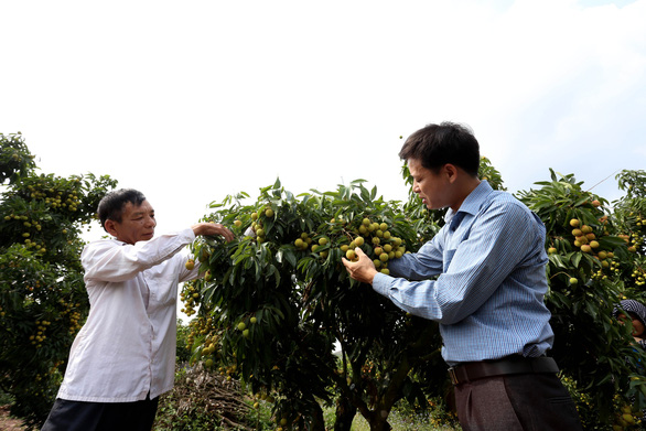Bộ Nông nghiệp họp trực tuyến với Nhật để thúc đẩy xuất khẩu vải thiều - Ảnh 1.