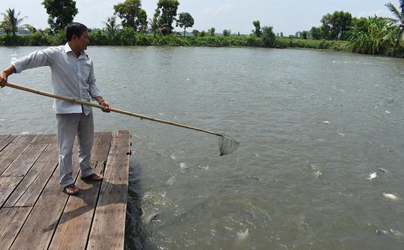 Đưa cá tra vào bữa ăn của người Việt - Ảnh 1.