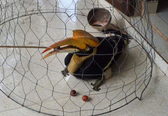Thấy chim quý bay vào nhà, chàng trai trẻ gọi kiểm lâm - Ảnh 1.