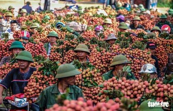 Bắc Giang tổ chức hội nghị trực tuyến với Trung Quốc để tiêu thụ vải thiều - Ảnh 1.