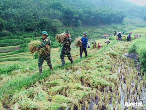 Bạn trẻ đội nắng hè xuống đồng giúp dân gặt lúa - Ảnh 2.