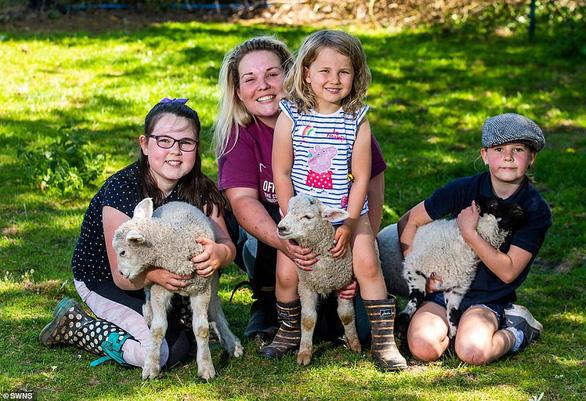Ngựa nuôi 3 con cừu mồ côi - Ảnh 4.