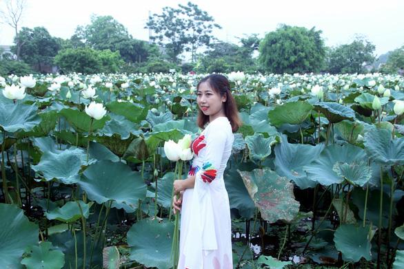Ngây ngất với đầm sen trắng xứ Huế ở Hà thành - Ảnh 6.