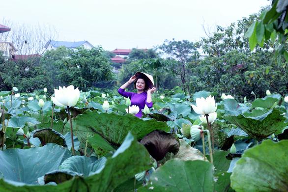 Ngây ngất với đầm sen trắng xứ Huế ở Hà thành - Ảnh 1.