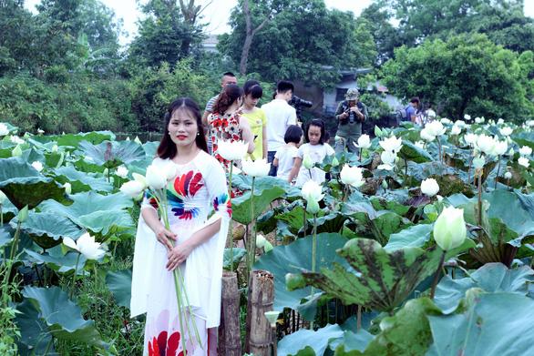 Ngây ngất với đầm sen trắng xứ Huế ở Hà thành - Ảnh 7.
