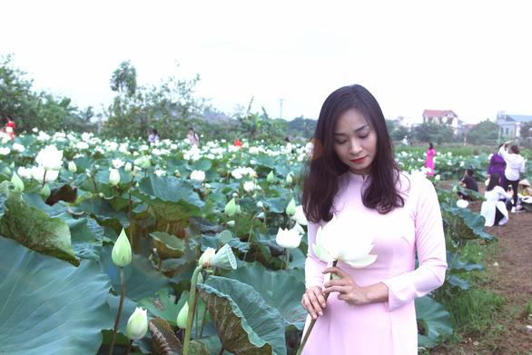 Ngây ngất với đầm sen trắng xứ Huế ở Hà thành - Ảnh 4.