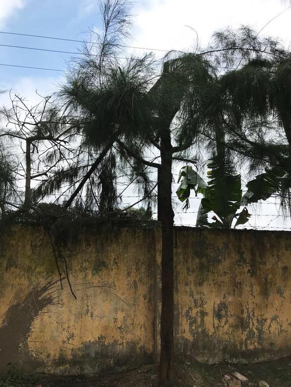 Học sinh lớp 9 bị điện giật chết khi cắt tỉa cây ở trường - Ảnh 1.